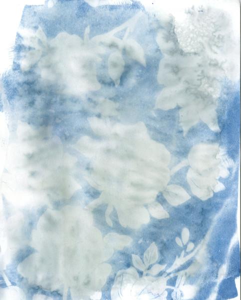 Overwater Roses II
