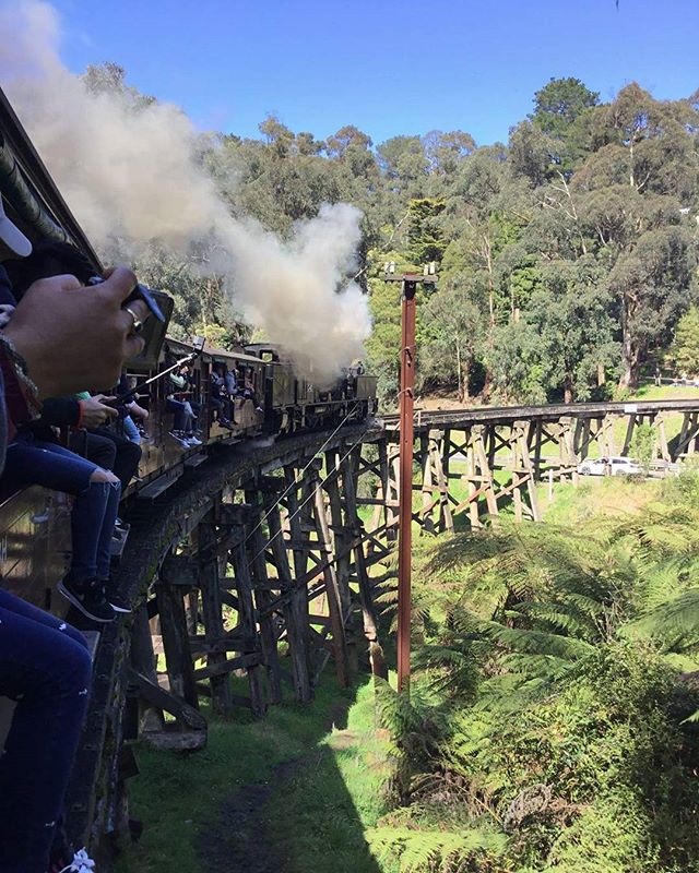 Puffing billy railway!!!!_Everyone just sit on the window😂😂😂_..._..._..._..._.._..._..