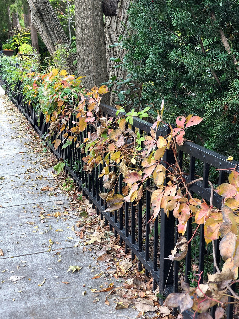 Va creeper fallish color fence line2