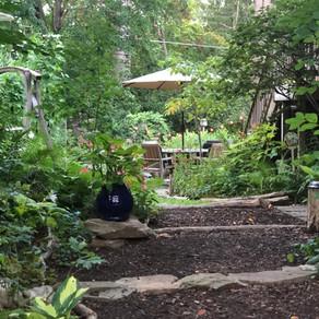 Native Plant Garden Tour: A Backyard Paradise