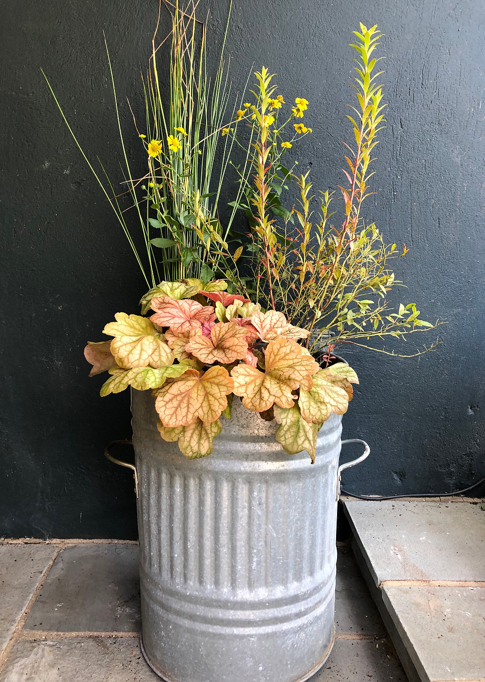native plants in container rush low bush blueberry, dogtooth daisy, heuchera