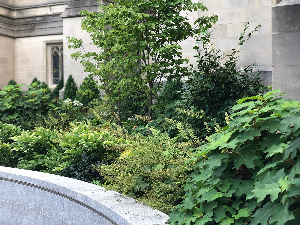 National Cathedral garden bed