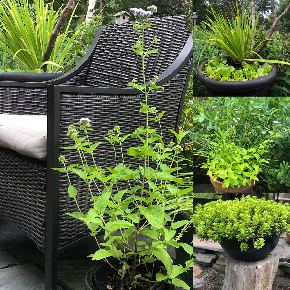 perennial containers