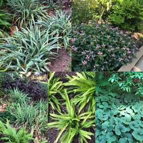 Ornamental Plant Substitutes: Planting This Instead of Liriope