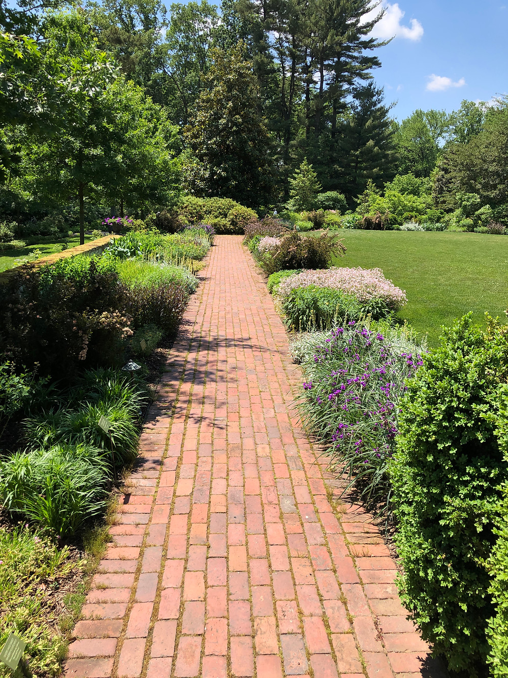 Formal perennial bed with natives