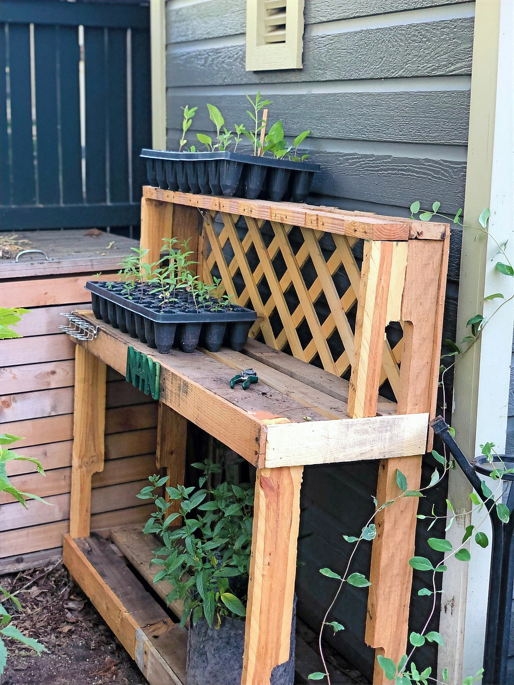 potting bench with native seedling trays