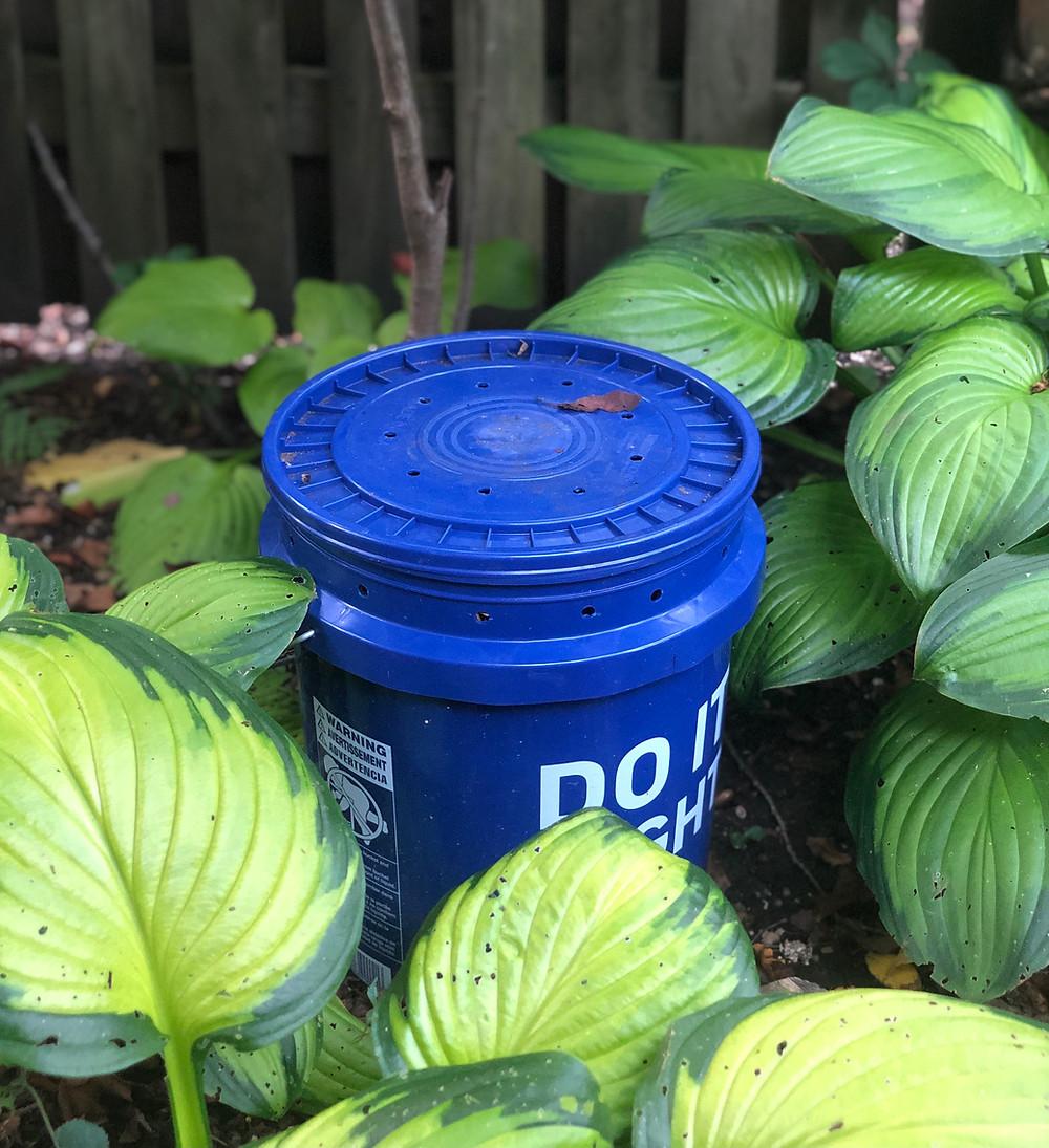 tallamy mosquito larva bucket