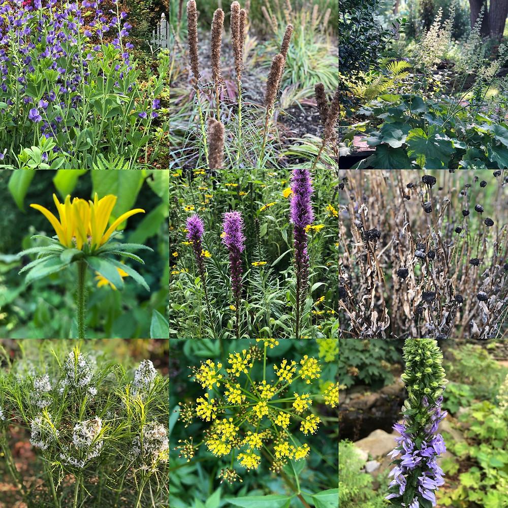 Maryland and Virginia native plants