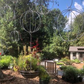 Native Plant Nursery: Lauren's Garden Service