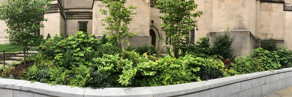 panorama of National Cathedral raised garden bed