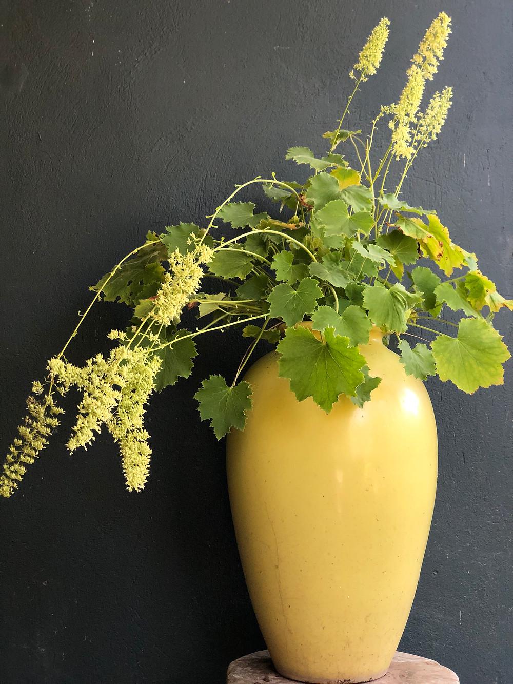 native plant heuchera 'autumn bride' in container