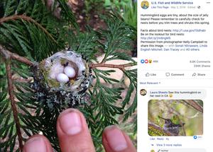 Native Plants Attract Birds