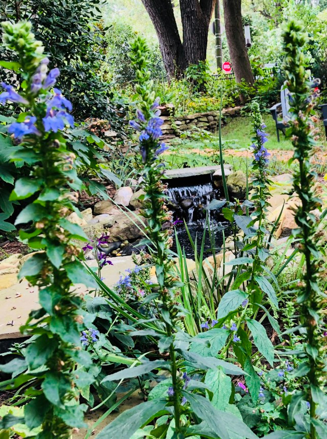 blue lobelia pond side