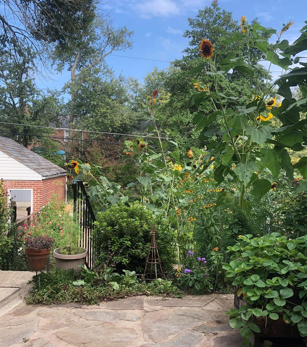 rowhome native plant garden