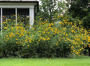 Virginia Native Plants & Maryland Native Plants for Chesapeake Bay Area - Tools for your Native Garden