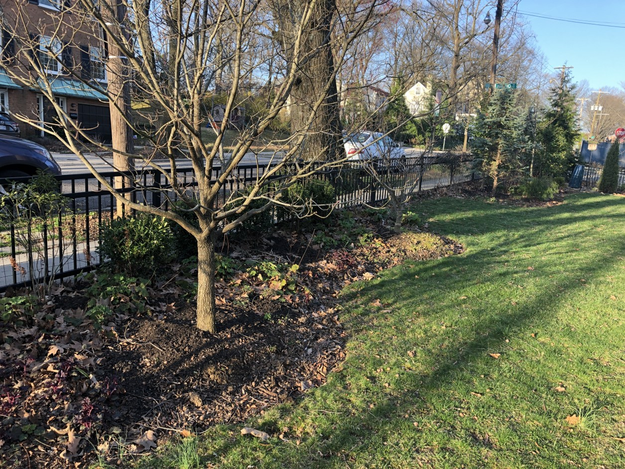 Native dogwood and planted beds