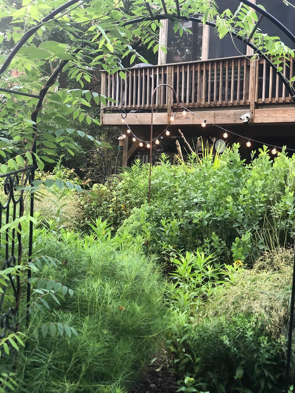 sunny native perennial garden