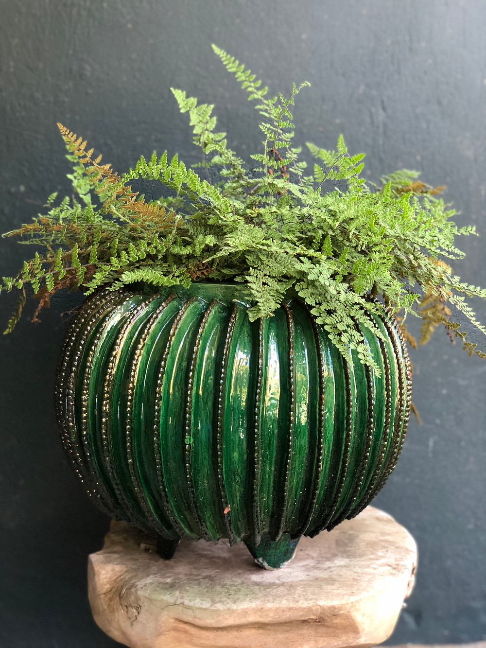 native hairy lip fern in container