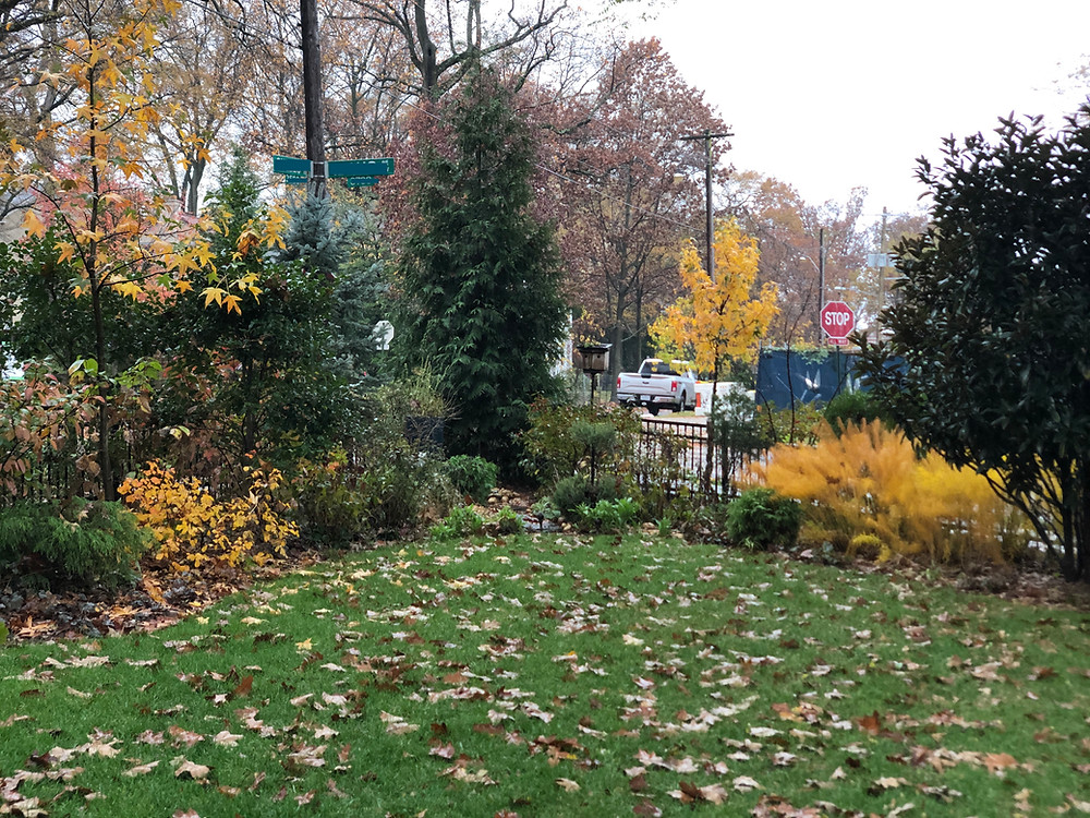 mostly native garden bed in fall with yellow