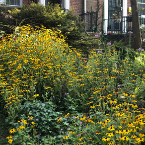 Native Plant Garden Tour: Rodgers Forge Row Home