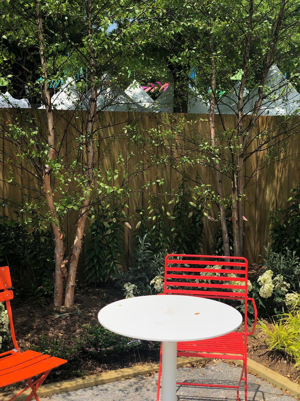 small urban garden river birches