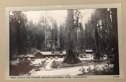 VINTAGE Postcard Sequoia National Park,CA Post Office and Stores California