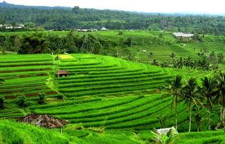 Ubud Villas Activities