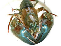 What is in season Wild Food Crayfish