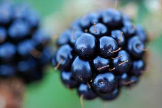 Blackberry or Bramble identification recipes