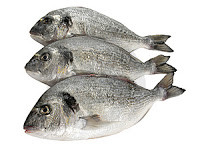 Dorade Sea Bream Wild Food Italy