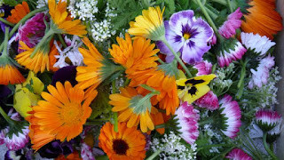 Ultimate Edible Wild and Garden Flowers guide