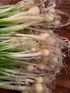 Few or Lesser Flowered Garlic Bulbs