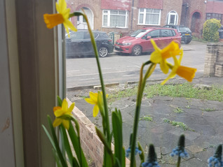 March flower of the Month: The Daffodil