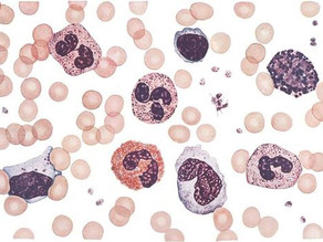 LEUKOCYTES: WHAT ARE THEY?