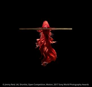 Sony World Photography Awards - Jimmy Reid