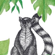 Lemur tag 2