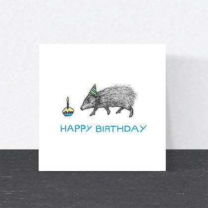 Pygmy hog Birthday card