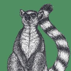 Lemur tag