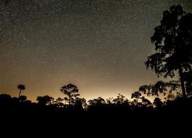 Everglades (1 of 1).jpg