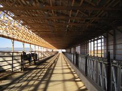 cattle barn 2.JPG