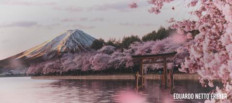 'Blossom Portal' por Link TDX