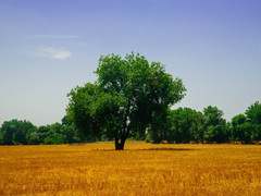 Should Rancher continue gifting of land?