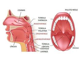 boca faringe laringe otorrino pediatra df emergencia criança otorrinolaringologia asa sul asa norte brasilia distrito federal lago sul lago norte urgente ouvido nariz garganta adulto