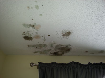 The Job of A Mold Remediation Team