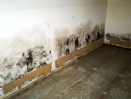 Everything About Mold Remediation In New York