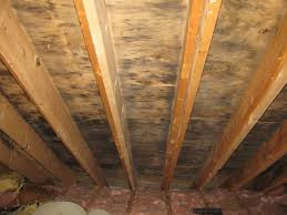 Why Mold Grows in the Attic
