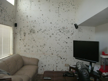 Mold Assessments in New York