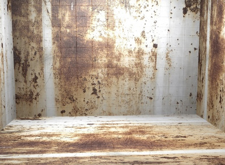 Knowing the Warning Signs of Toxic Mold