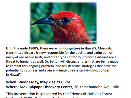 Public presentation about mosquitoes in Hawai'i