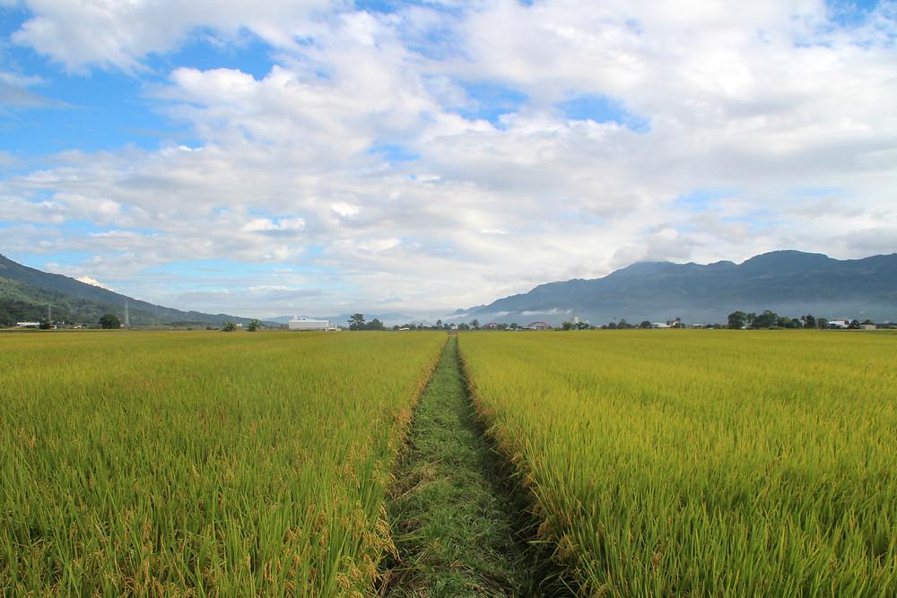 east rift valley, Taitung